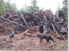 09-16-07 stump piles burn down 008