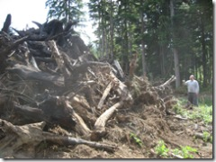 09-07-07 Burning stumps in lower pastures 001