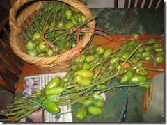09-25-07 Fall Harvest in the mountains 008